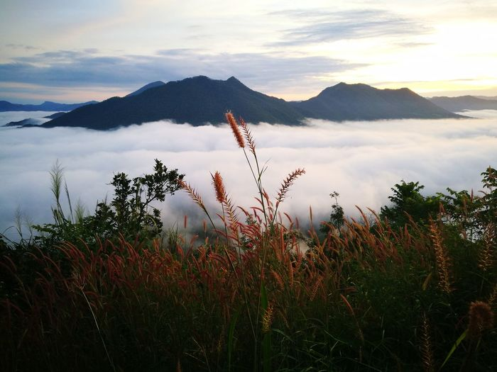 sea of mist , ChiangKhan Thailand Chiangkhan Thailand Sea Of clouds Sea Of Mist Mist Sun Rise Flower Mountain Dawn Sky Landscape Close-up