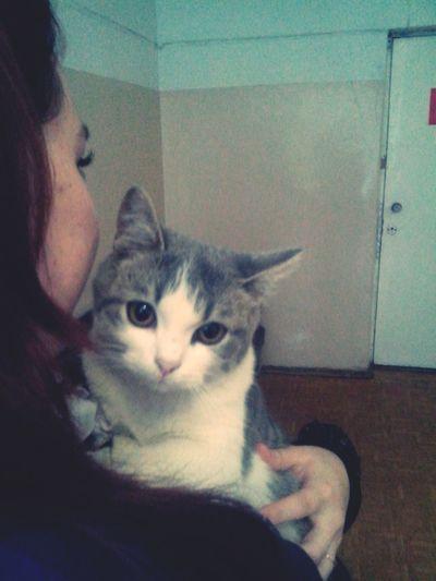 мы влюбились с первого взгляда) котенька милая