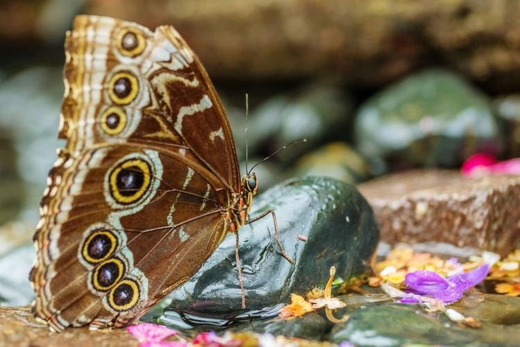 Close-up of butterfly on stone
