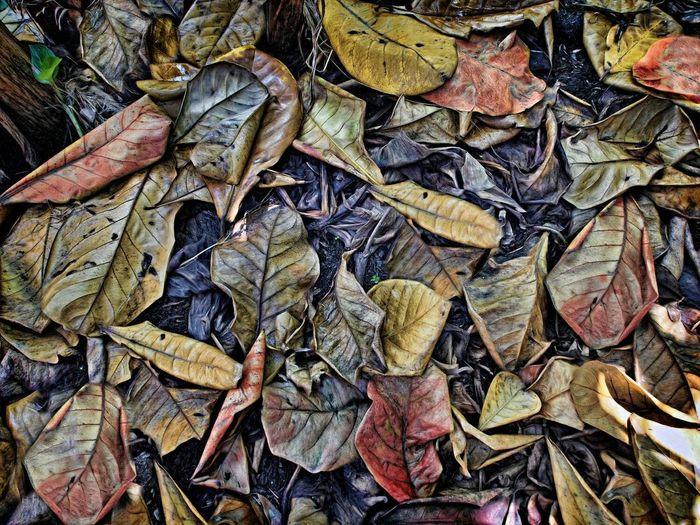 Driedleaves FloraANDfauna Leaves Textures And Surfaces Lookingdownproject Memories ❤