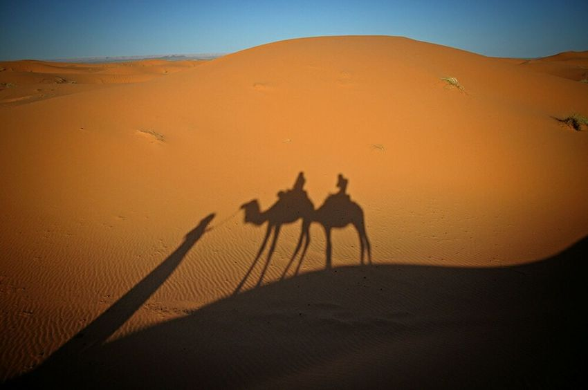 Adventure Buddies Camel Riding Light And Shadow Creative Light And Shadow Camel Shadow Desert Dunes Of Merzouga Travellers Travel Photography Sahara Desert Life Deserts Around The World Eye4photography  EyeEm Best Shots EyeEm Gallery - Erg Chebbi Morroco
