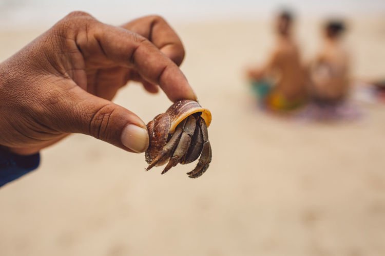 Cropped hand holding crab at beach