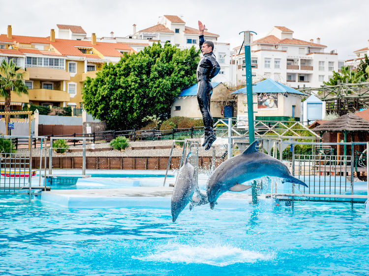 Dolphins show in Selwo Marina in Benalmadena, Malaga. It is the only park of its kind in Andalusia Amusement Park Animal Themes Aqua Park Arena Benalmádena Benalmádena, Malaga, Spain Day Dolphin Show  Dolphinarium Entertainment Malaga Mammal Marina Outdoors People Performance Performer  Selwo Marina Show SPAIN Spanish Splashing Water Swimming Pool Tricks Water