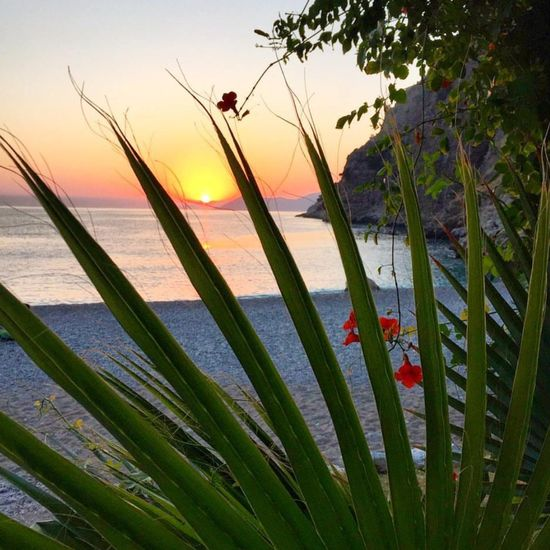 Sunset 🌅 Tree Water Sunset Dawn Sea Flower Beach Beauty Red Leaf Wildflower Reed - Grass Family In Bloom