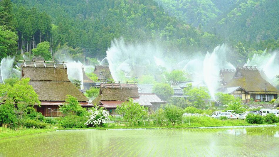 京都 美山 かやぶきの里 田んぼ