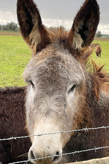 Close-up of a horse in field