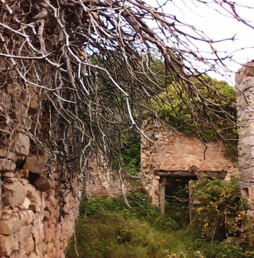 The Architect - 2016 EyeEm Awards Catalonia Masia Catalana 16th Century Old Stone Houses Pre-Pyrenees Catalunya Masia Les Llosses Girona SPAIN Spain♥ Ruins Ruin Ruina Ruinas La Clara Overgrown Overgrown And Beautiful The Secret Spaces