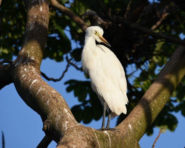 Bird Perching On Tree Trunk