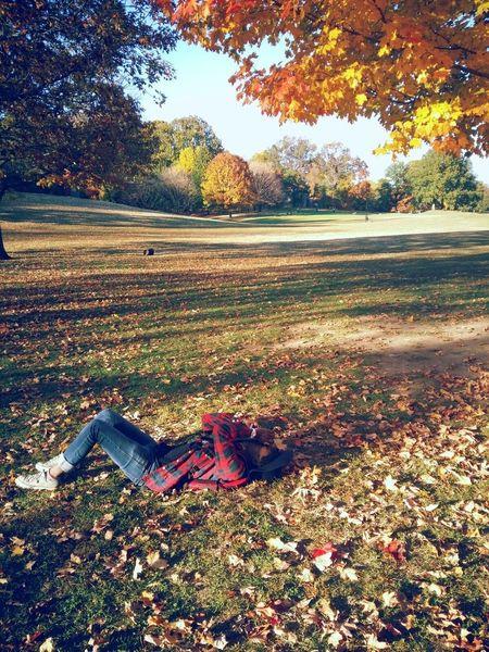 Prospect Patk last November. Perfect Day Prospect Park Brooklyn Sunny Day Enjoying Life
