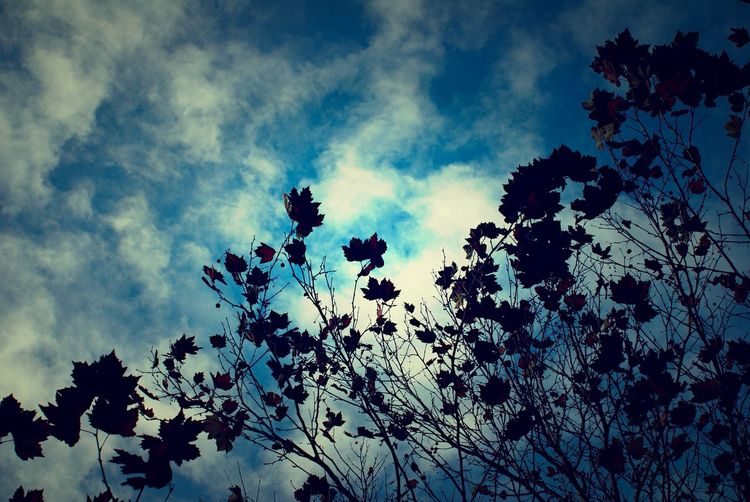 Low angle view of flowers against sky