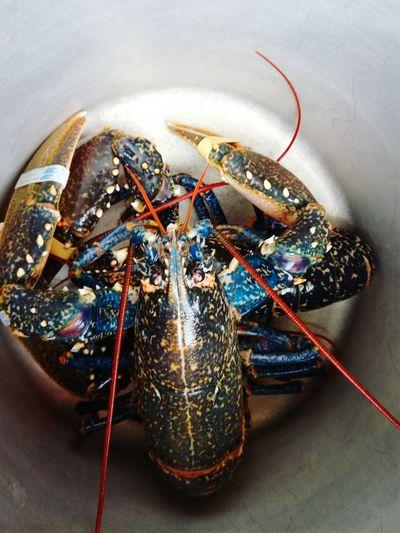 Homard Lobster First Eyeem Photo