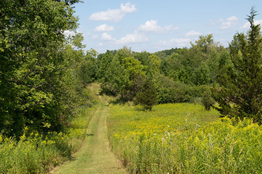Taken along a nature trail in summer time. Grass Green Growing Growth Landscape Lush Foliage Nature Outdoors Relaxing Moments Remote Tranquil Scene Tree