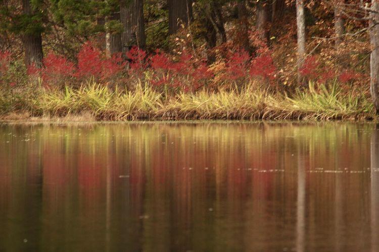 観音沼森林公園 紅葉 山の風景