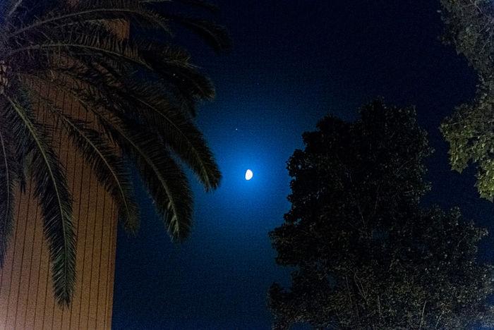Nikon Dslr Nocturna Luna❤