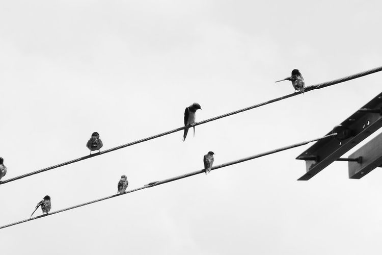 Low angle view of birds perching on cables against sky