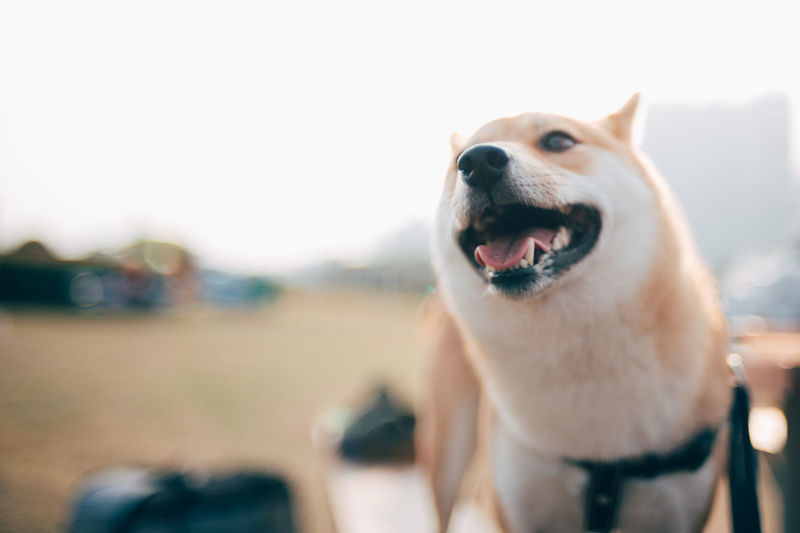 Close-Up Of Dog Looking Away While Standing Against Sky