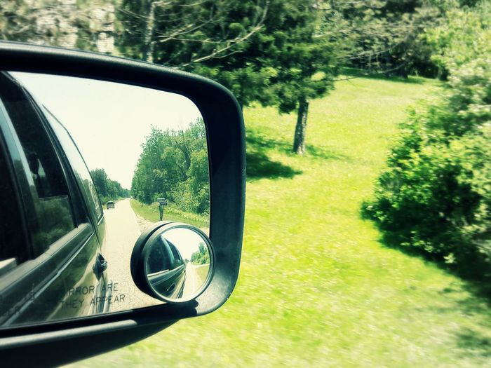 Reflection of trees in side-view mirror