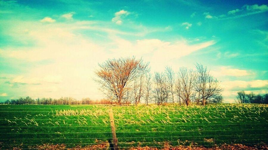 IamNewHere KentuckyLove Beauty In Nature First Eyeem Photo