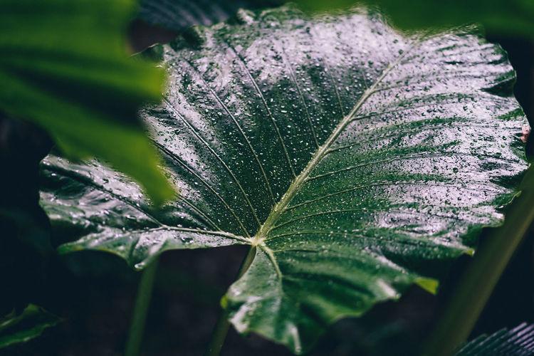 Natural rainy