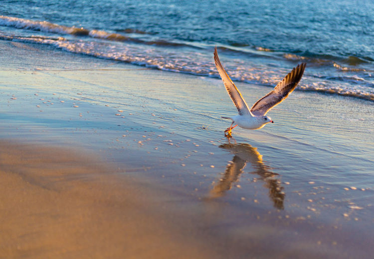 Close-up of seagull taking off at beach