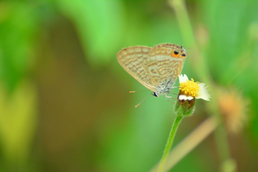 The Close-up Butterfly on the rest situation Butterfly Butterfly - Insect Flower Flying Yellow Brown Nature Grass Branch Branches And Leaves Art Abstract Blurred Motion Blurred Background Relaxing Tiger Butterfly Sunn Hemp Indian Hemp Butterfly On Flower Leaf Natural ASIA Forest Wing Colorful