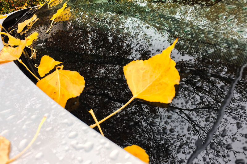 Yellow Plant Part Leaf Plant Nature Autumn Change No People Day Beauty In Nature Close-up High Angle View Tree Leaves Fall Water RainDrop Reflection Carpart Windshield Autumn Mood