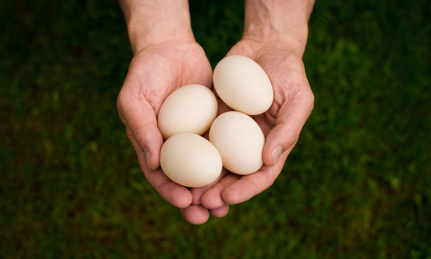 Showcase June Duck Eggs Still Life Hands Unrecognizable Person Detail Green Color Organic Food Close-up Outdoors Day Human Finger Holding Grass Beauty In Nature Shot From Above  Produce Person Fresh Fine Art Photography