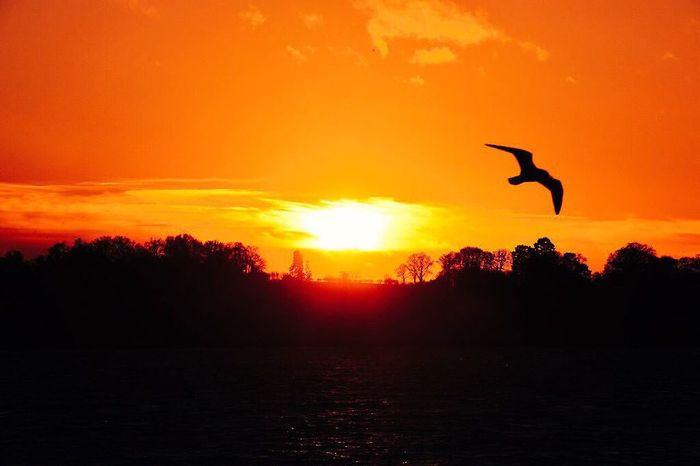 Sunset at Pitsford reservoir in Northamptonshire Sunset Reservoir Sun Water Seagull Bird Setting Sun Waves Sky Weather Chill Northampton Northants Northamptonshire