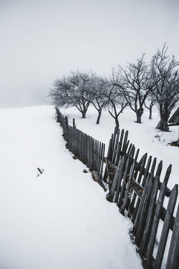 Tree Trees Bare Tree Beauty In Nature Cold Temperature Day Extreme Weather Fence Field Frozen Landscape Minimal Minimalism Nature No People Outdoors Scenics Sky Snow Snowing Tranquility Tree Weather White Background White Color