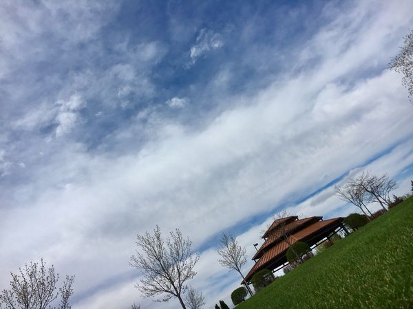 Sky Tree Cloud - Sky Low Angle View Day No People Outdoors Beauty In Nature Art Is Everywhere Beauty In Nature Break The Mold EyeEmNewHere Live For The Story Sommergefühle