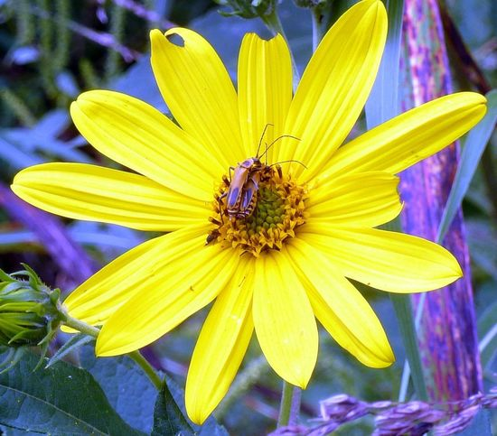Beauty In Nature Blooming Close-up Flower Flower Head Freshness Petal Yellow Color Palatte