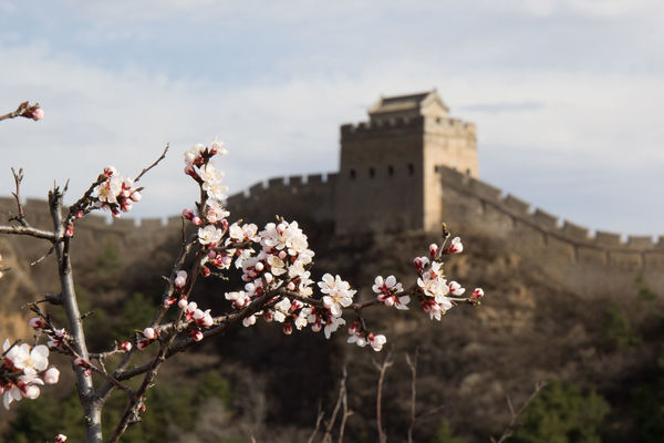 Chinesewall Mountain Springtime EyeEmNewHere Flowers