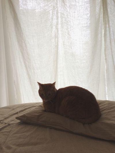 なんか絵になる。 Cat