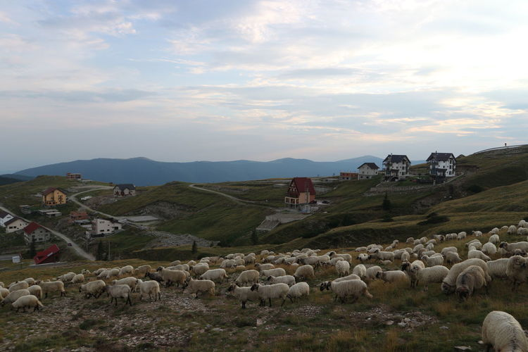 Selfmade Landscape House Mountain Agriculture Sky No People Vacations Outdoors Nature Beauty In Nature Day Romaniafrumoasa Transalpina Nofilter Sheep🐑 Sheep