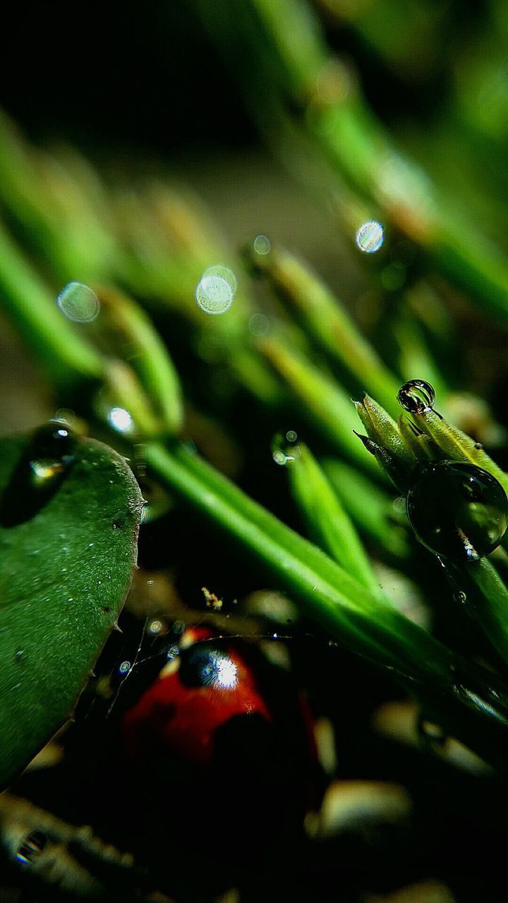green color, close-up, no people, nature, drop, leaf, animal themes, water, outdoors, day, freshness, beauty in nature