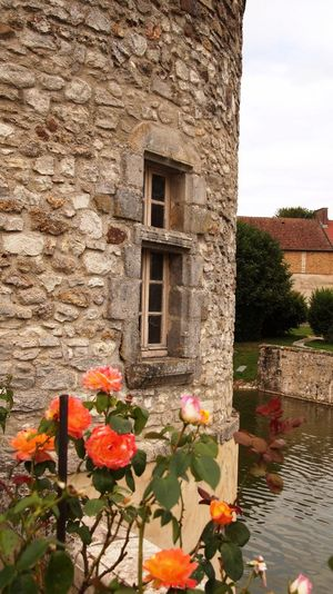 Château Champagne Roses Rose - Flower Etoge Beautiful Environment Enjoying Life