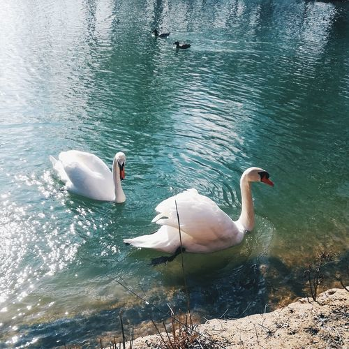 EyeEmNewHere Light EyeEm Nature Lover Water_collection Waterscape Italy Eyembestshots EyeEm Gallery Animals In The Wild Water Animal Themes Bird Lake Swimming Animal Wildlife Swan Nature No People Water Bird Outdoors Day