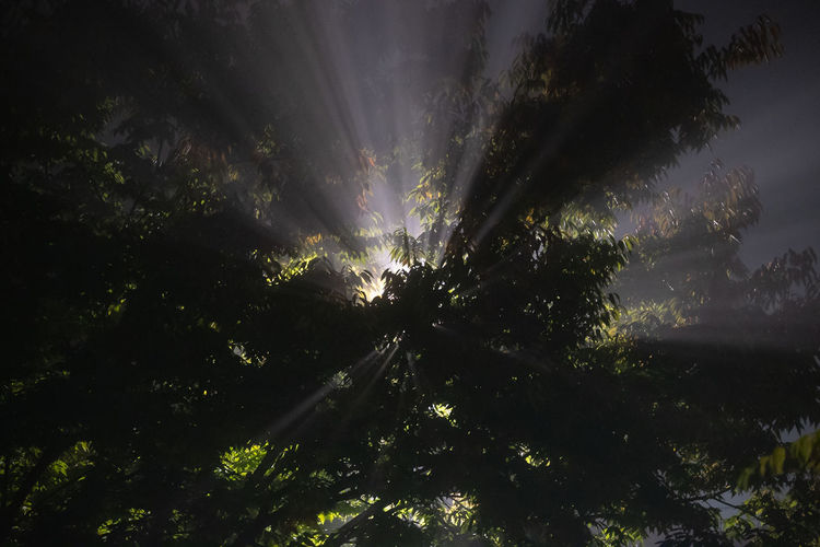 Low angle view of sunlight streaming through trees in forest