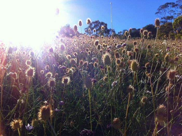 No Filter, No Edit, Just Photography Flowers Grassland Sunkiss Fields Hills South Australia Adelaide S.A. Bright EyeEmNewHere EyeEmNewHere