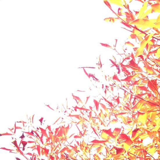 葉っぱ Leaves