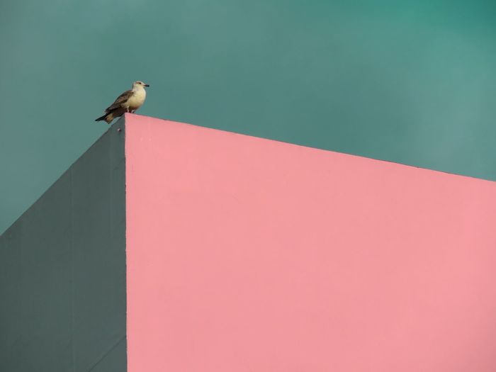 Bird perching on built structure against clear sky