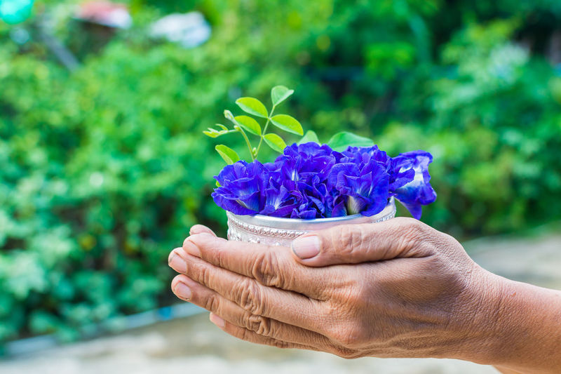 Cropped image of hand holding blue flower pot