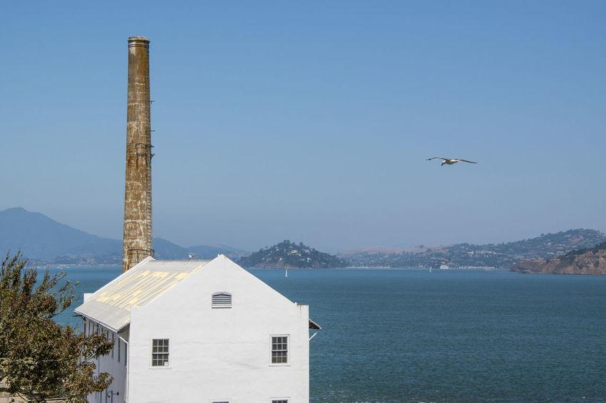 Alcatraz Alcatraz Island San Francisco SanFranciscoBay USA Architecture Bird Building Exterior Day Outdoors Sanfranciscocalifornia Sea Sky Water