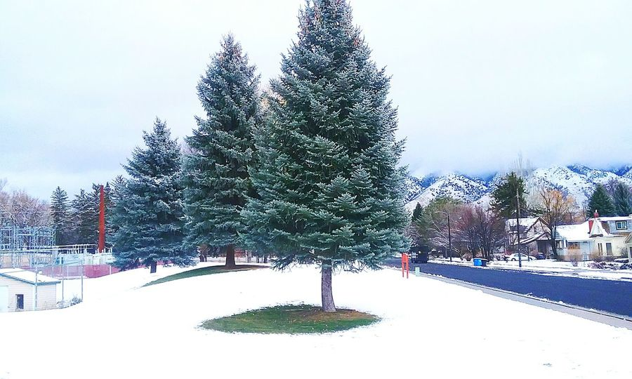 Tree Winter Snow Cold Temperature Christmas Christmas Tree Snowing No People Frozen Water Evergreen Tree Outdoors Sky Nature Day