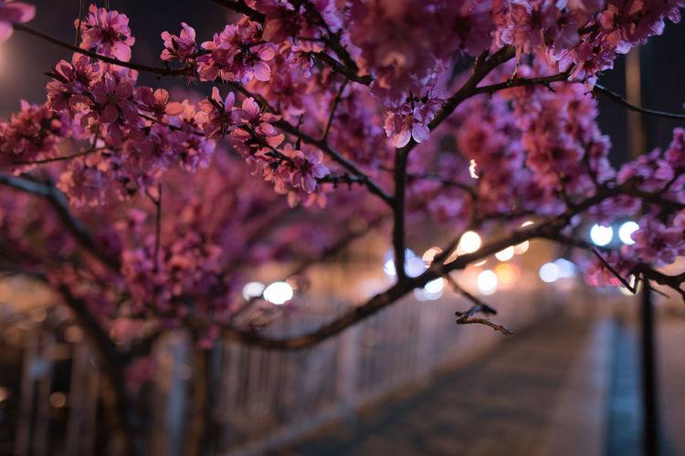 blossom at