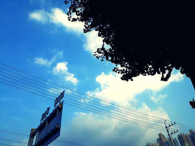 맑은날 건물 Outdoors 감성사진 감성 아날로그 Analog Korea 풍경 구름 하늘 필터 Treval Blue Blue Sky City Technology Sky Cloud - Sky Tree Telephone Line Power Line