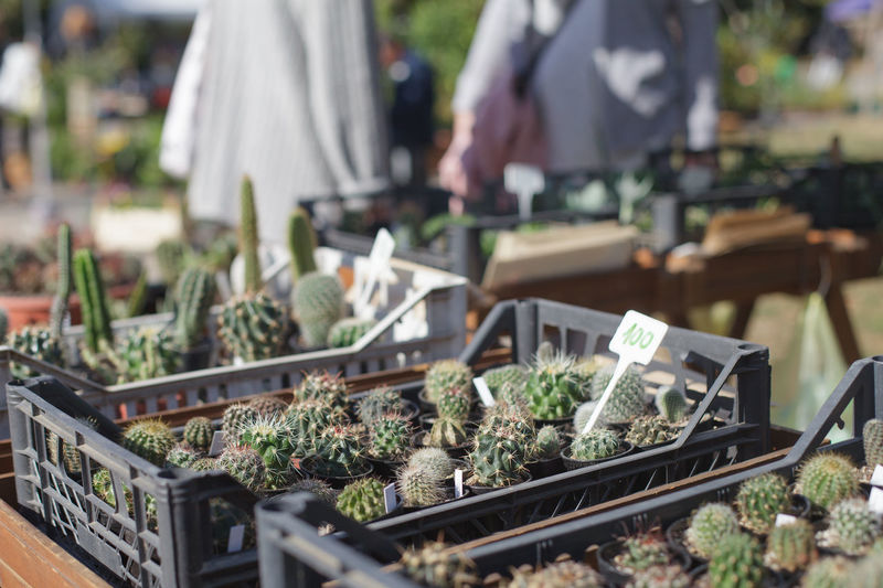 many small cactuses in boxes Retail  Plant Market Business Nature For Sale Growth Day Botany Small Business Outdoors Green Color Close-up Cactus Box Container Decor Floral Succulent Plant Gardening Botanical Miniature Houseplant Thorn Hobby