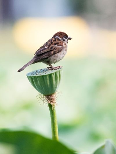 Animal Themes Animal Wildlife One Animal Focus On Foreground Animal Animals In The Wild Bird Plant Vertebrate Close-up Nature Day Beauty In Nature No People Perching Growth Green Color Flower Outdoors Fragility EyeEmNewHere EyeEmNewHere