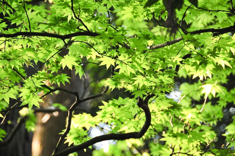 Leaves on tree