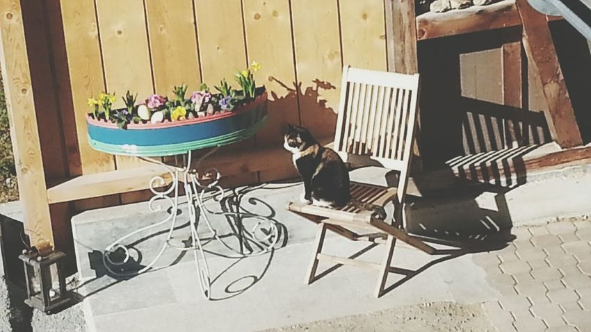 My Kitty Cat is chillin in the sun Impossible Moments Spring Flowers